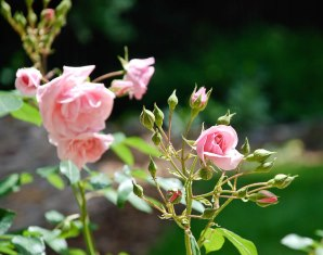 romantikwochenende-versoix-8