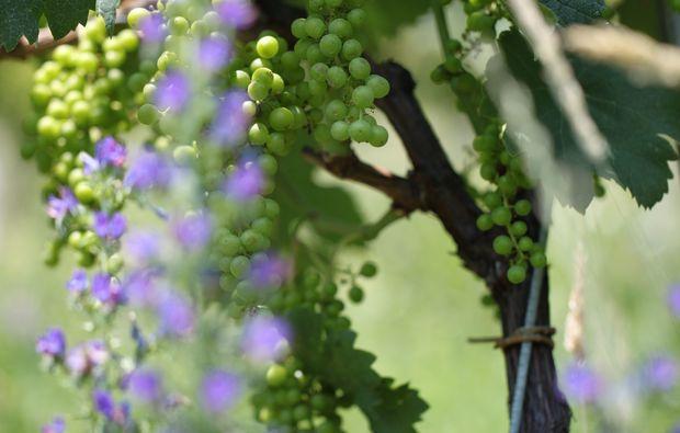 weindegustation-tremona-bg7