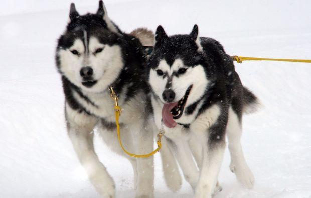 husky-tour-nueziders-erlebnis