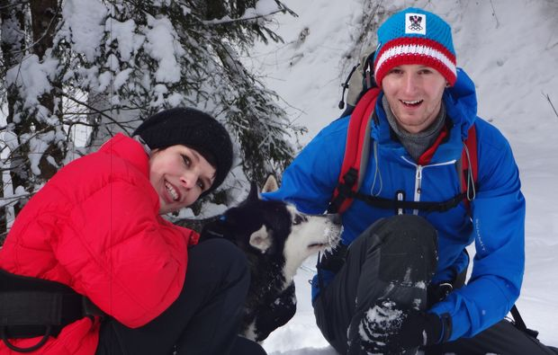 husky-tour-snow