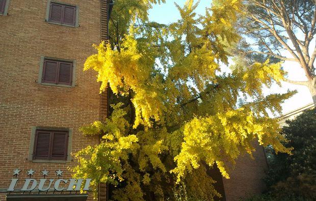 bella-italia-umbrien-41511426940