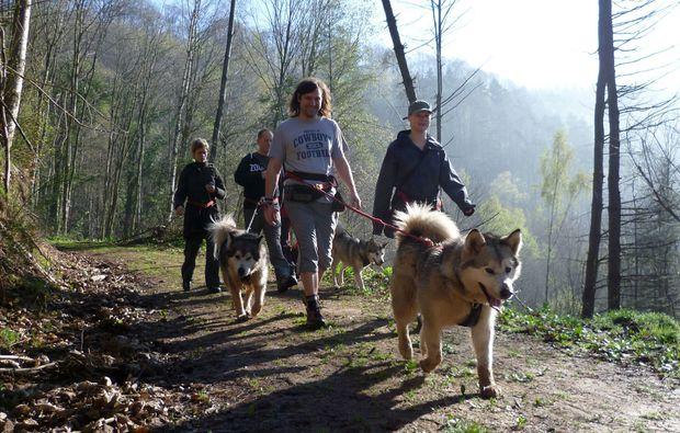 husky-trekking-siersburg-abenteuer