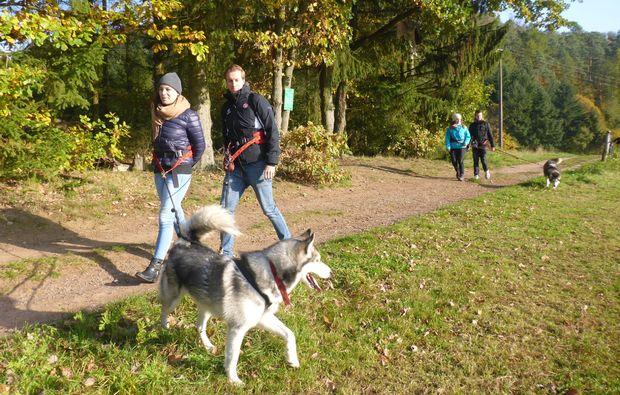 husky-trekking-siersburg-outdoor