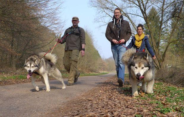 husky-trekking-siersburg-spazieren