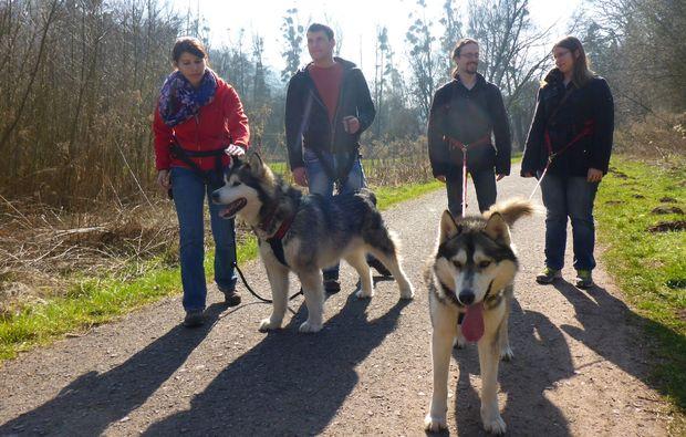 husky-trekking-siersburg-spaziergang