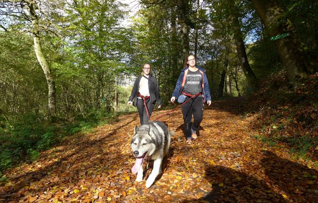 husky-trekking-siersburg-wald