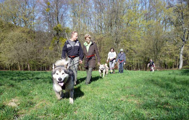 husky-trekking-siersburg-wandern