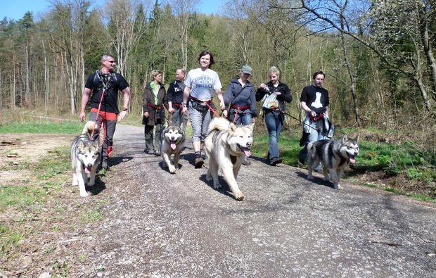 husky-trekking-siersburg-wanderung