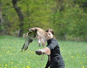 Falkner-Erlebnis - Bad Wünnenberg Greifvögel kennlernen -  ca. 1 Stunde