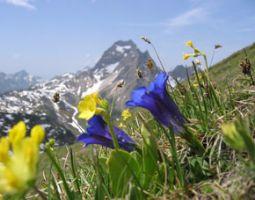 almhuetten-berghotels-wandern