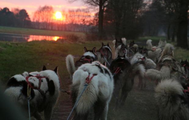 schlittenhunde-fahren-twistringen