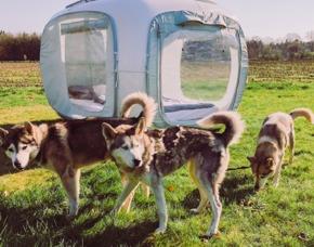 Außergewöhnlich Übernachten im sleeperoo Cube - 1 ÜN (Preis B - Mo-Do) - Husky Farm Peissen - Peissen im sleeperoo Cube - inklusive Chillbox – Husky Farm Peissen