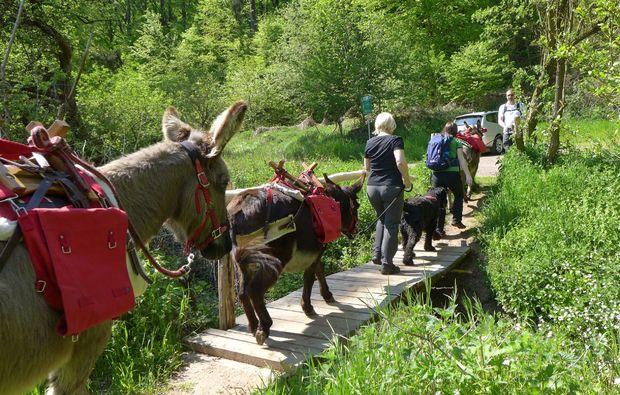 eseltrekking-wallerfangen-adventure