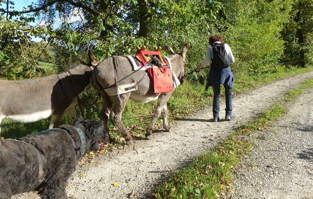 eseltrekking-wallerfangen-natur