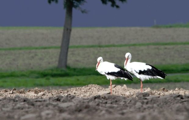 fototour-olfen-storch