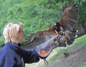 Falkner für einen Tag Falkner-Erlebnis - 5 Stunden