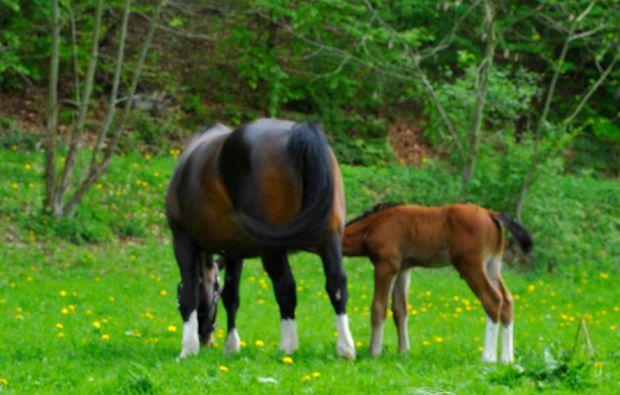 zauberhafte-unterkuenfte-frankenroda-horses-nature