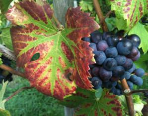 Weinbergwanderung mit Walking Weinprobe mit Verkostung