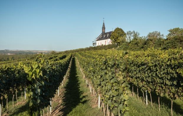 weinbergwanderung-keltern-bg4