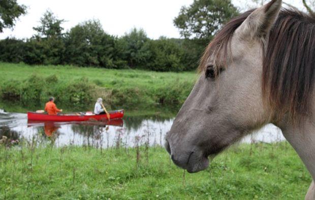 fotokurs-olfen-pferd