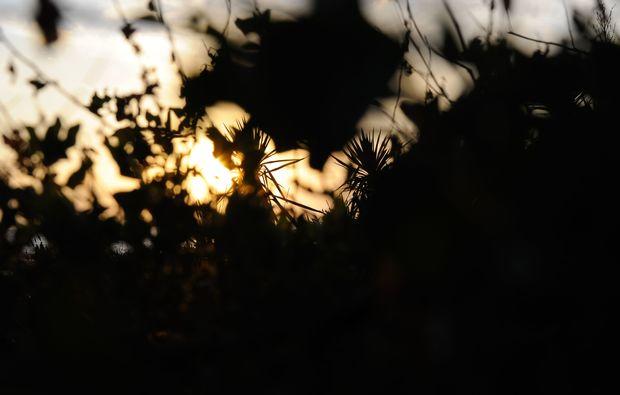 fotokurs-muenchen-grashalm