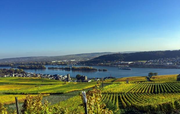 weinbergwanderung-ruedesheim-am-rhein-bg9