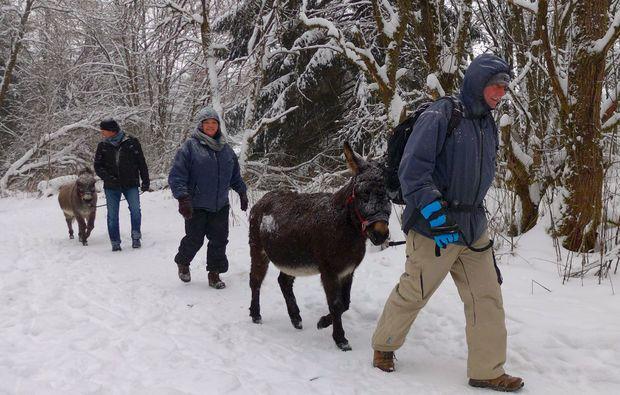 eseltrekking-heinade-winter