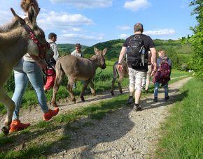 Esel-Trekking-Tour (Halbtagestour) Esel-Trekking - 4 Stunden