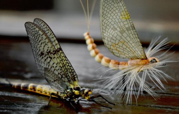 fliegenfischen-muenchen-koeder-insekten