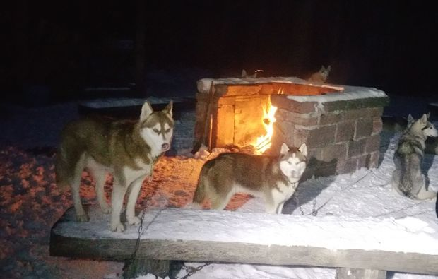 schlittenhundefahrt-bad-herrenalb-lagerfeuer