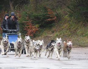 Schlittenhunde-Fahrt für Zwei 6 Stunden