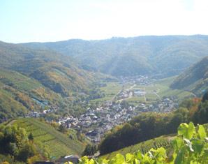 Weinbergwanderung Ahrweiler