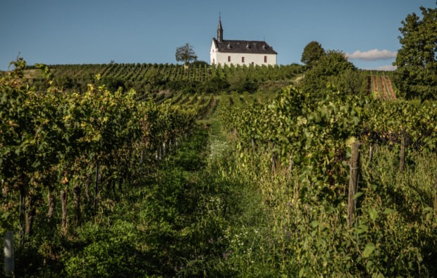 weinbergwanderung-ahrweiler-bg1