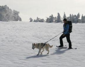 Schneeschuhtour mit Huskys - ca. 3 Stunden Schneeschuhtour mit Huskys - ca. 3 Stunden