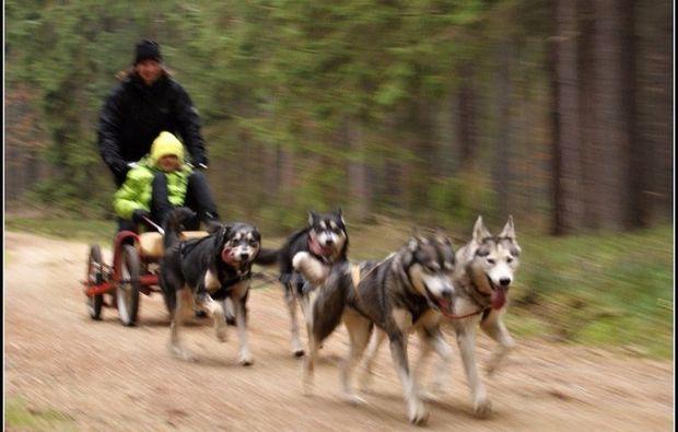 waldviertel-schlittenhundefahrt-alt-nagelberg