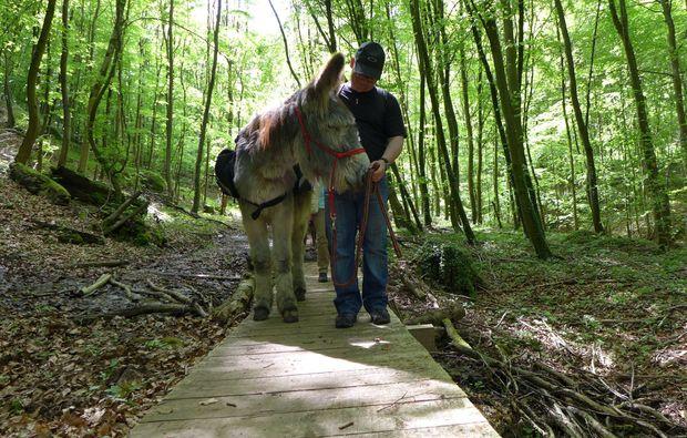 eseltrekking-siersburg-erlebnis