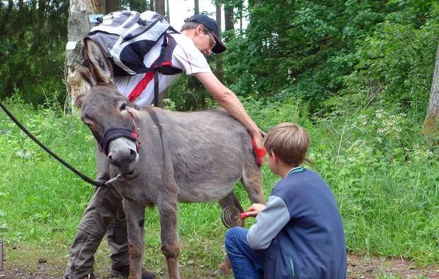 eseltrekking-siersburg-fuehrung