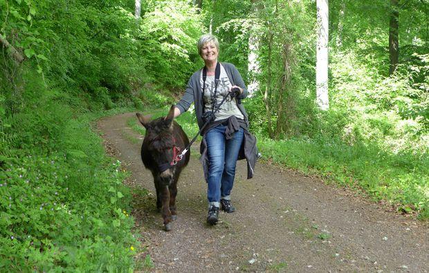 eseltrekking-siersburg-tiere