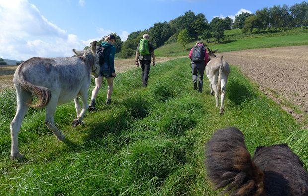 eseltrekking-siersburg-tierisch