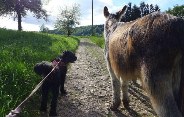 eseltrekking-siersburg-tierisches-abenteuer
