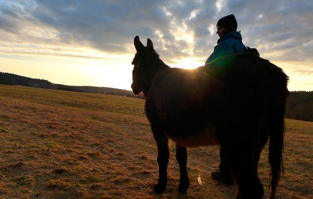 eseltrekking-siersburg-tierliebhaber