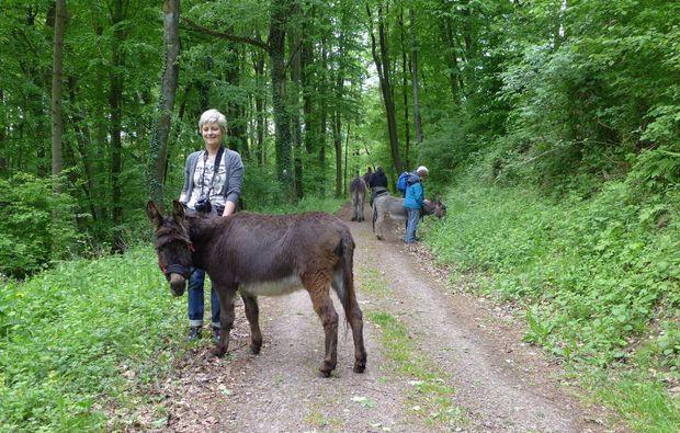 eseltrekking-siersburg-waldwanderung