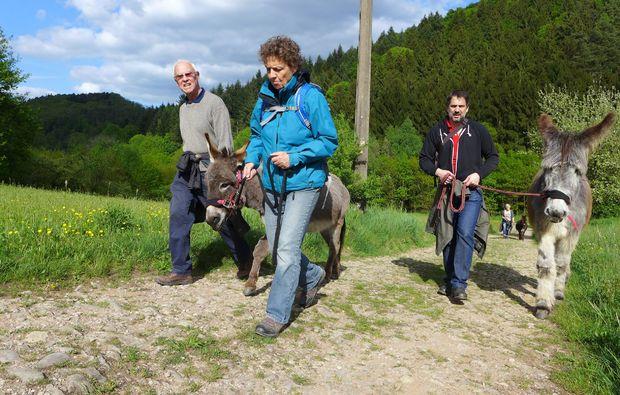 eseltrekking-siersburg-wandern