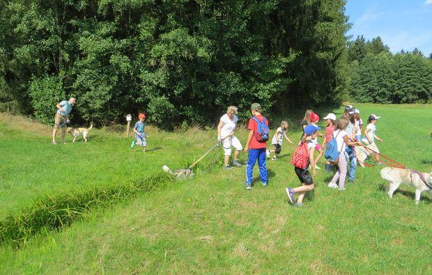 husky-trekking-kulz-spaziergang