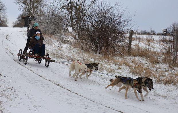 schlittenhundefahrt-halberstadt-passion