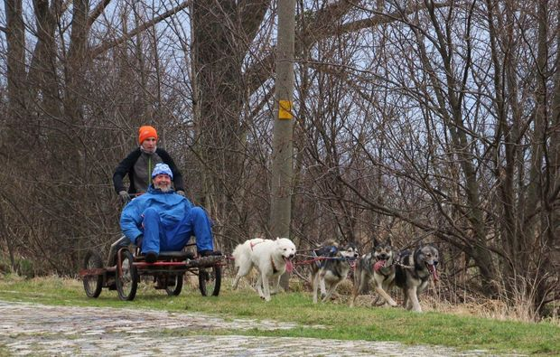 schlittenhundefahrt-halberstadt-sport