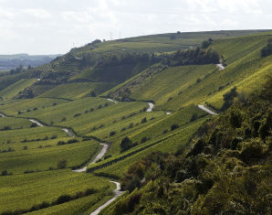 Weinbergwanderung mit Verkostung