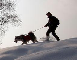 Husky-Trekking Tagesprogramm Tages-Tour - 6 Stunden