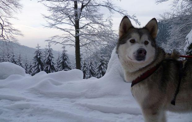 husky-trekking-clausthal-zellerfeld-love