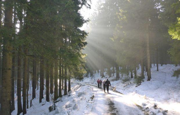 husky-trekking-clausthal-zellerfeld-natur